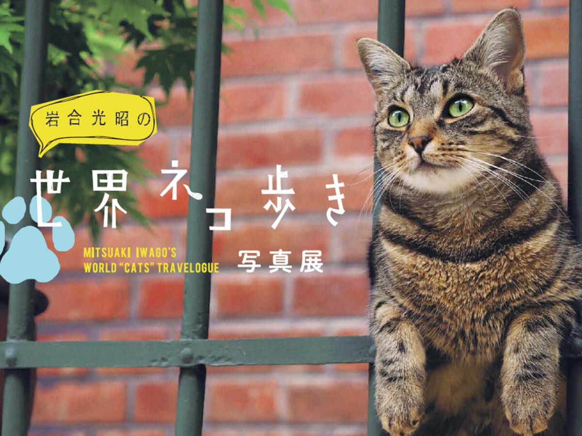 岩合光昭の世界ネコ歩き 八王子 展示 イベント